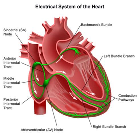 electrophysiological_rhythm_management1